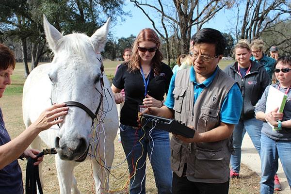 Dr. Huisheng Xie forme ici des étudiants qui étudient la profession d' acupuncteur dans l'administration de l'électroacupuncture chez le cheval.